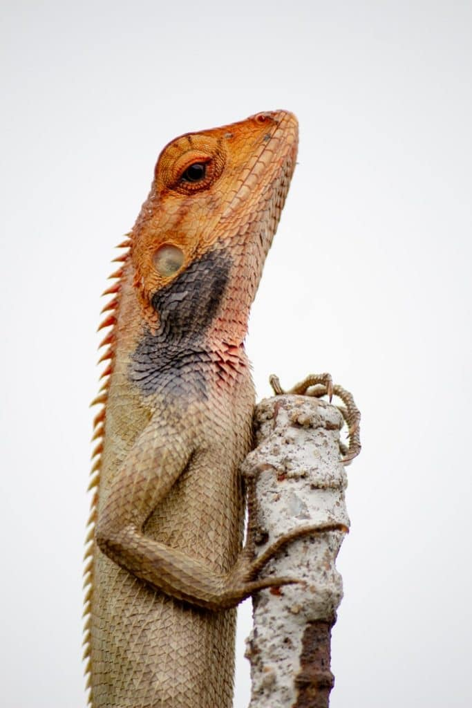 lizard standing on stone branch