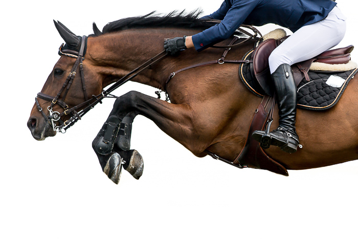 profile view of bay horse jumping with rider on bcak