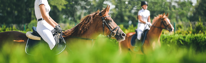 two dressage horse riders and their dressage horses through bushes