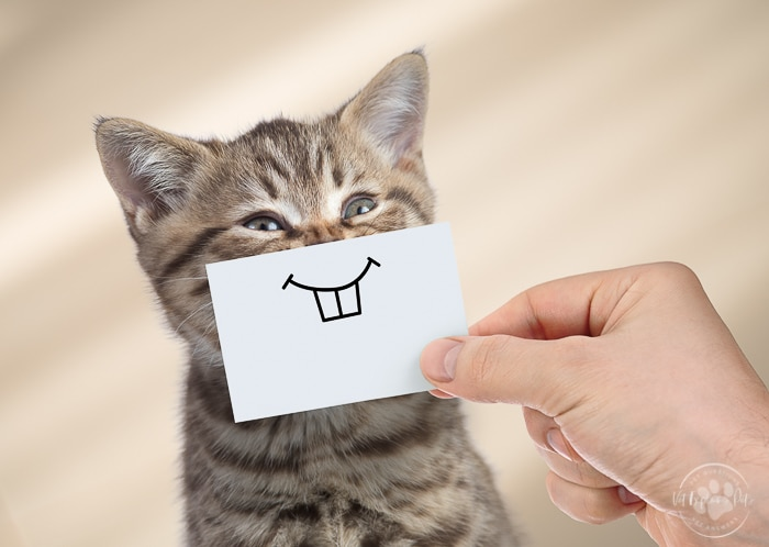 brown tabby kitten with smiley face paper put to his mouth by human hand