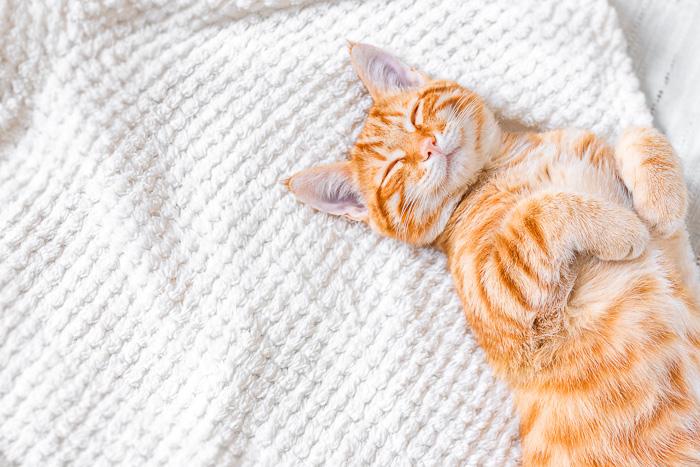 orange tabby cat sleeping on white bed