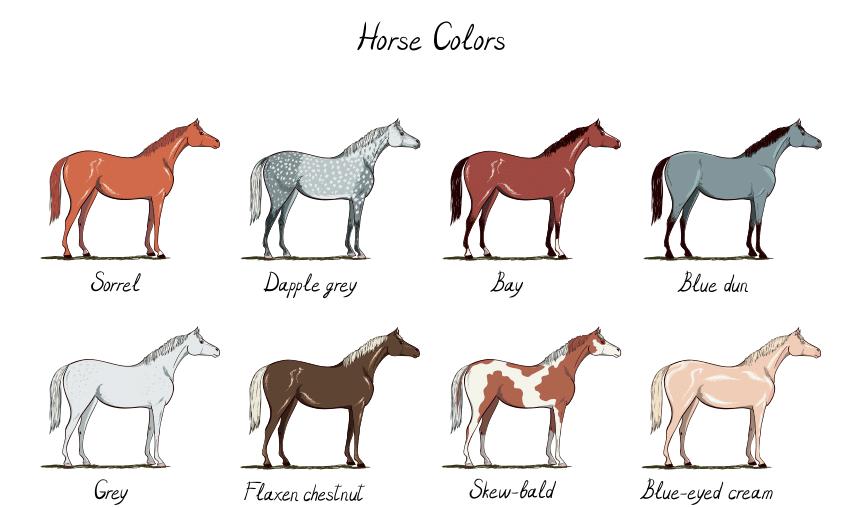 Horse Sorrel a prosztatitisekkel