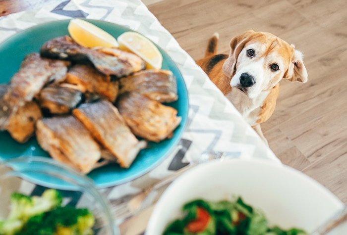 cooked fish on plate on table with dog looking at it