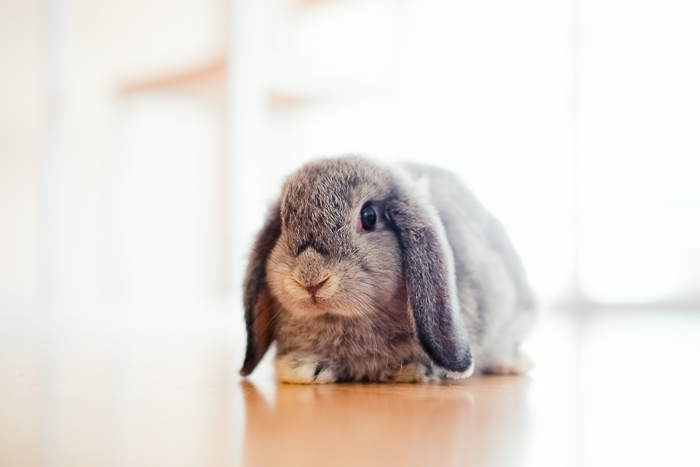 long-eared rabbit on the floor