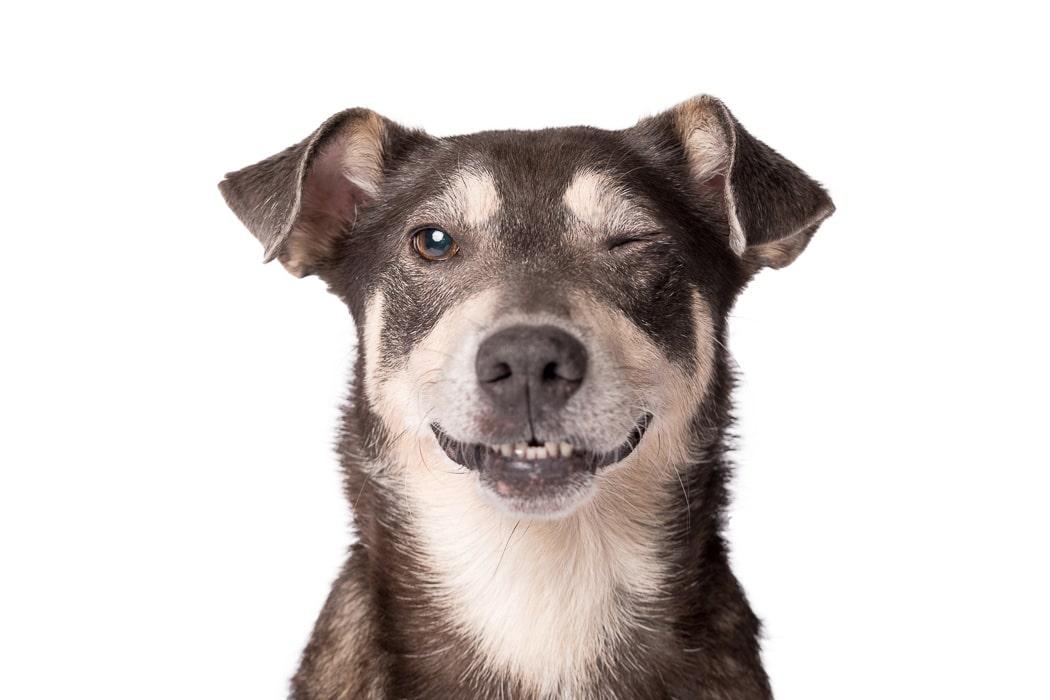 terrier dog blinking one eye