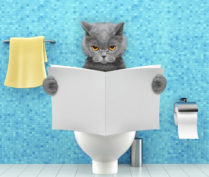 grey cat reading book on toilet