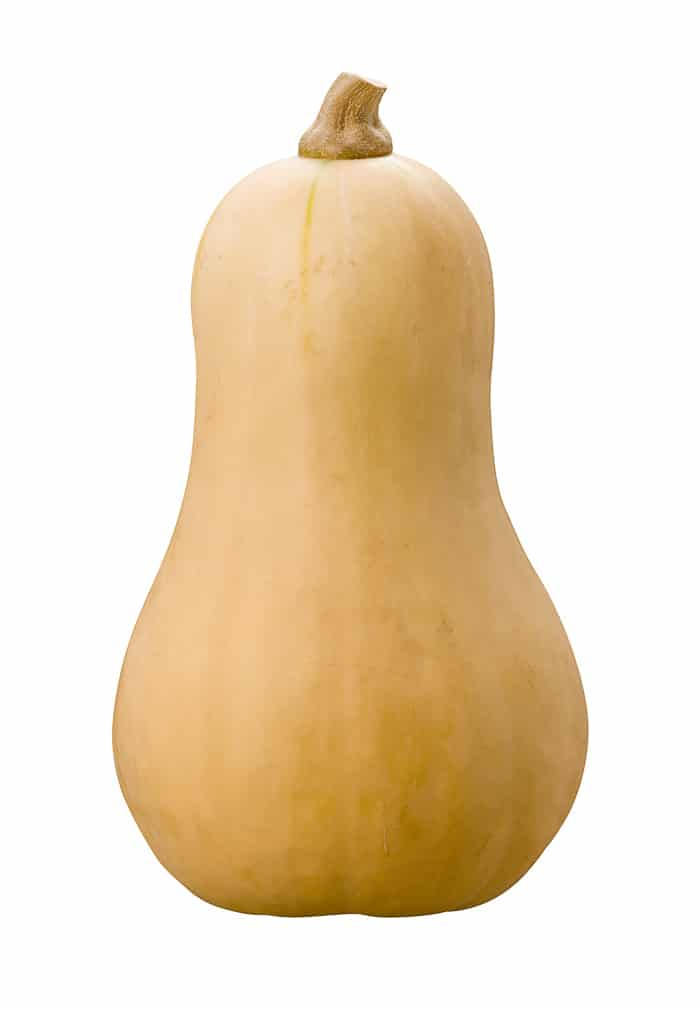 butternut squash standing upright with white background