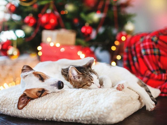 dog and cat cuddling under holiday tree