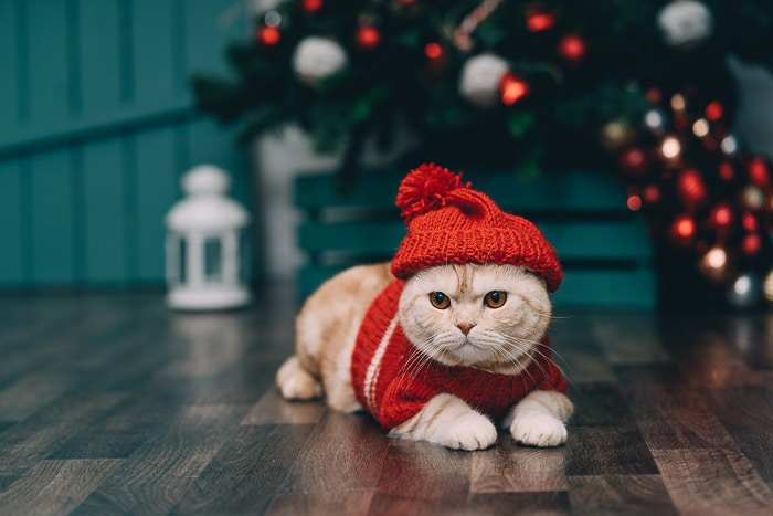 orange cat in christmas sweater and hat