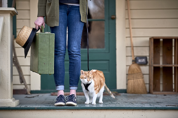 cat in travel harness with suitcase