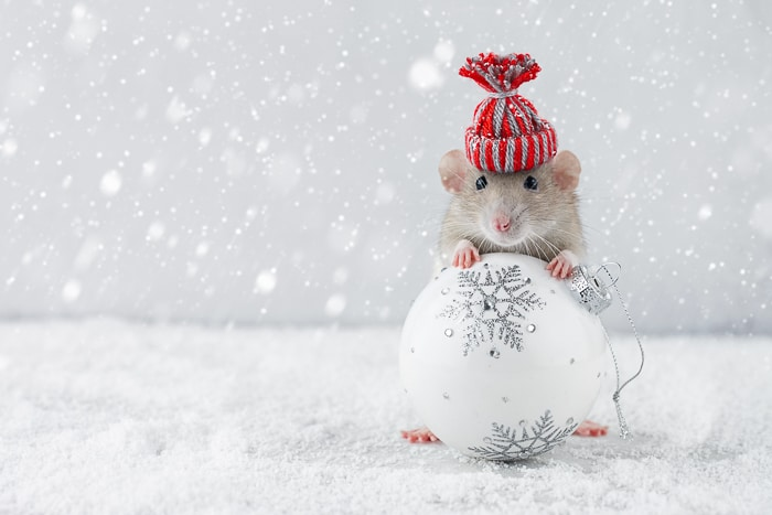 mouse hugging christmas ornament and wearing holiday hat