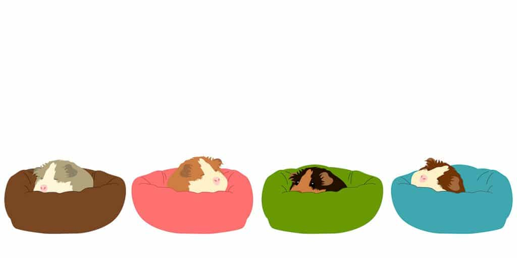 drawing of guinea pigs sleeping in colorful beds