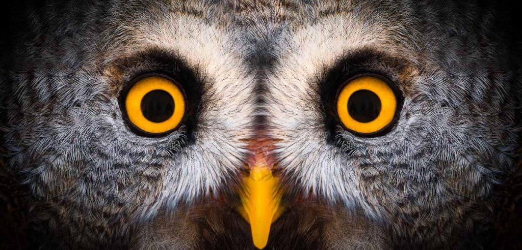 close up image of owl face and orange eyes