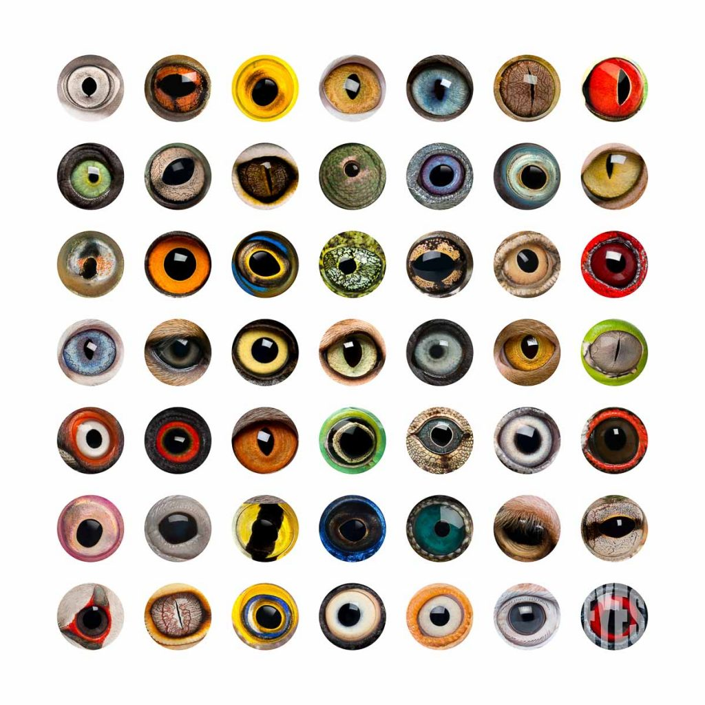 collection of different animal eyes