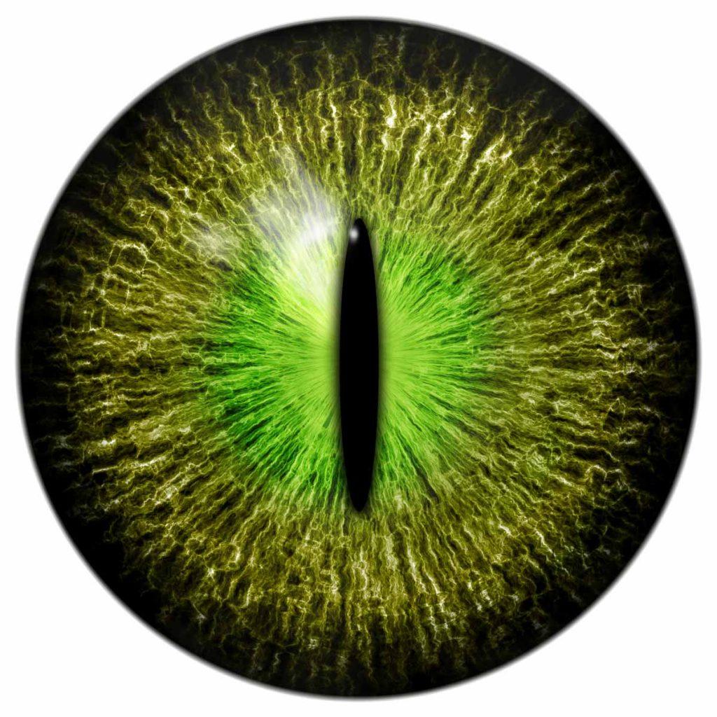 large green eyeball with vertical slit iris