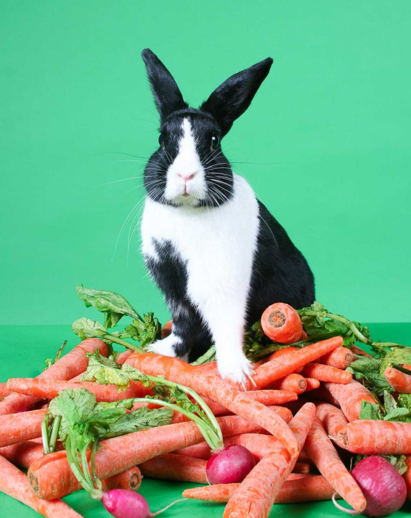 black and white rabbit sitting next to carrots and radishes with green background