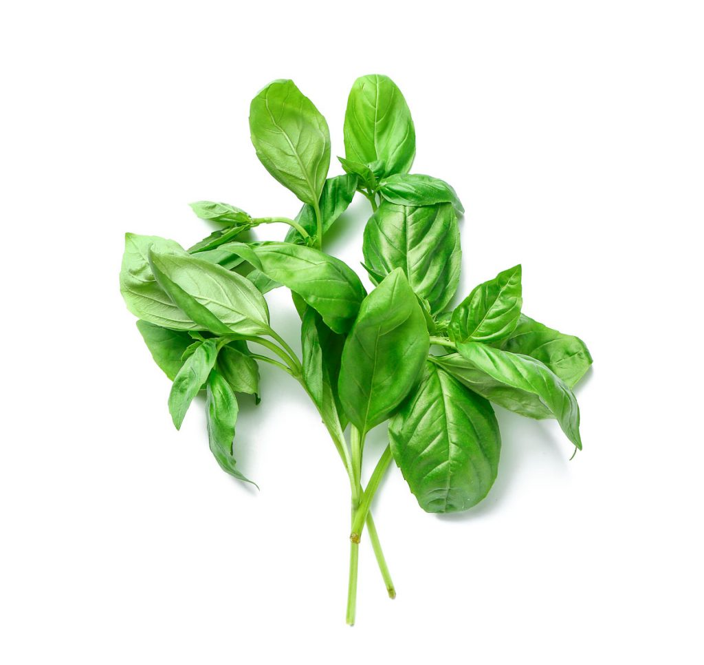 basil leaves laid out on white background