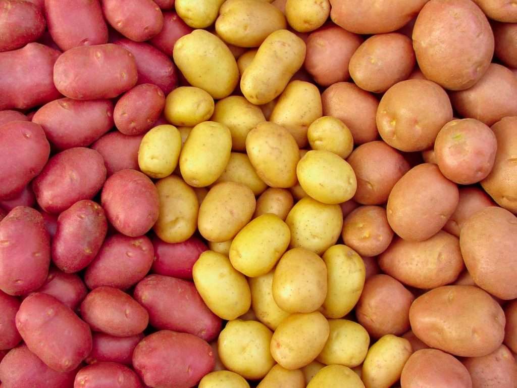 red yellow and brown potatoes in large pile